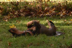 Roxy - Ablegen kann so entspannt sein